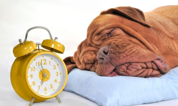 cuanto-duermen-perros-xl-668x400x80xX