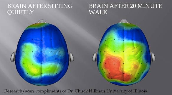 cerebro felicidad